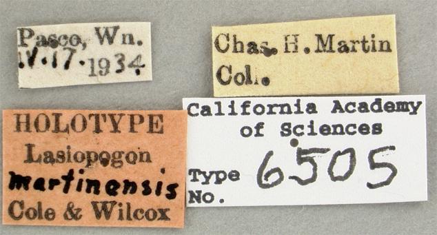Lasiopogon image