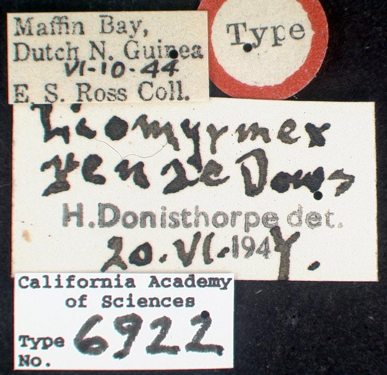 Liomyrmex image
