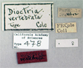 Image of Dioctria vertebrata