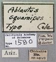 Image of Ablautus squamipes