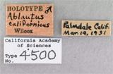 Image of Ablautus californicus