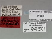 Image of Ablautus arnaudi