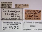 Image of Coleomyia sculleni