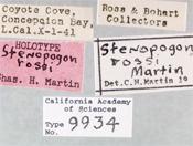 Image of Stenopogon rossi