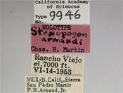 Image of Stenopogon arnaudi