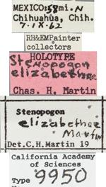 Image of Stenopogon elizabethae