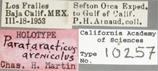Image of Parataracticus arenicolus