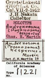 Image of Andrenosoma hesperium
