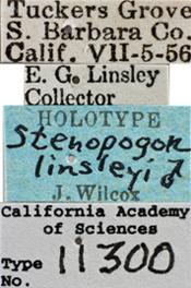 Image of Stenopogon linsleyi