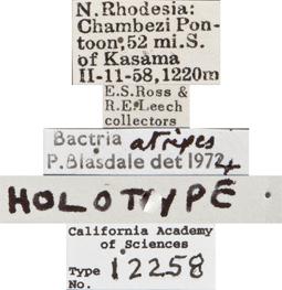 Image of Bactria atripes