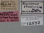 Image of Machimus stanfordae