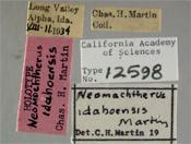 Image of Neomochtherus idahoae