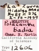Image of Polacantha badia