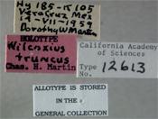 Image of Wilcoxius truncus