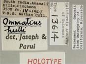 Image of Ommatius hulli