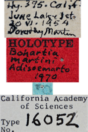 Image of Bohartia martini