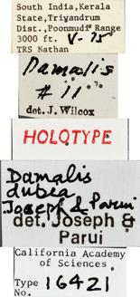 Image of Damalis dubia