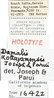 Image of Damalis kottayamensis