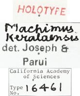 Image of Machimus keralaensis