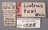 Listrus foxi image