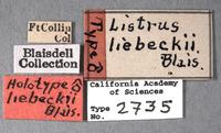 Image of Listrus liebecki