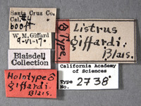 Image of Listrus giffardi