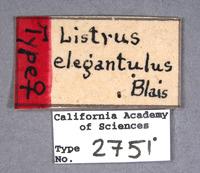 Listrus elegantulus image