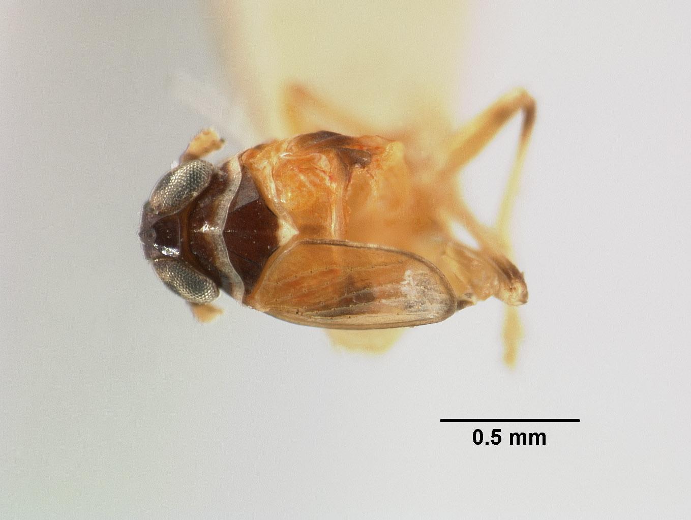 Liburnia image