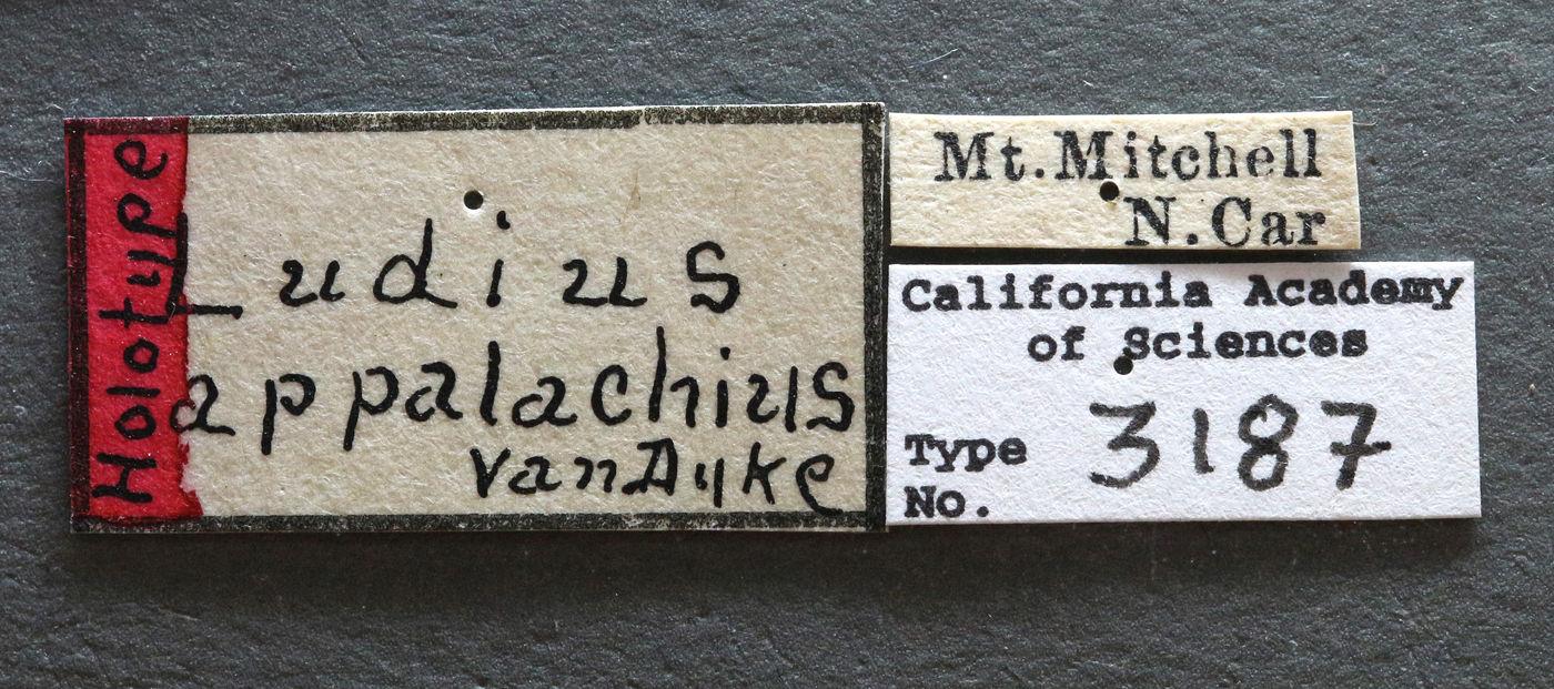 Ludius appalachius image