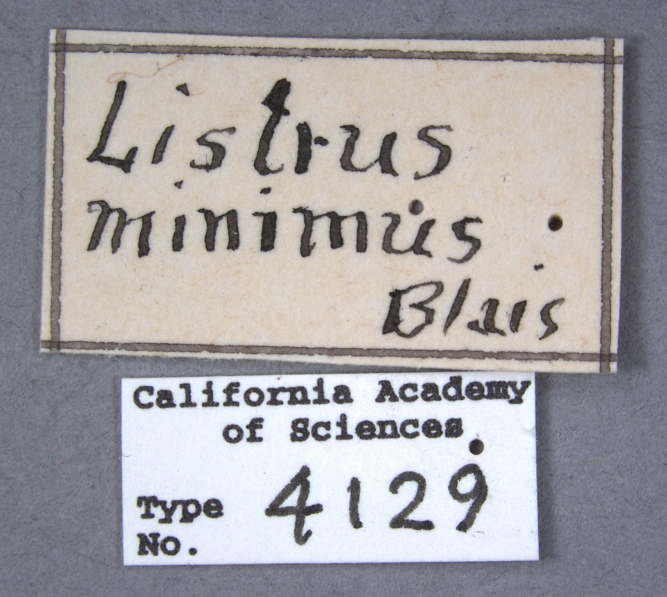 Listrus minimus image
