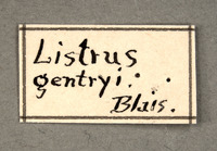 Listrus gentryi image