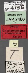 Image of Gnorimoschema neopetrella