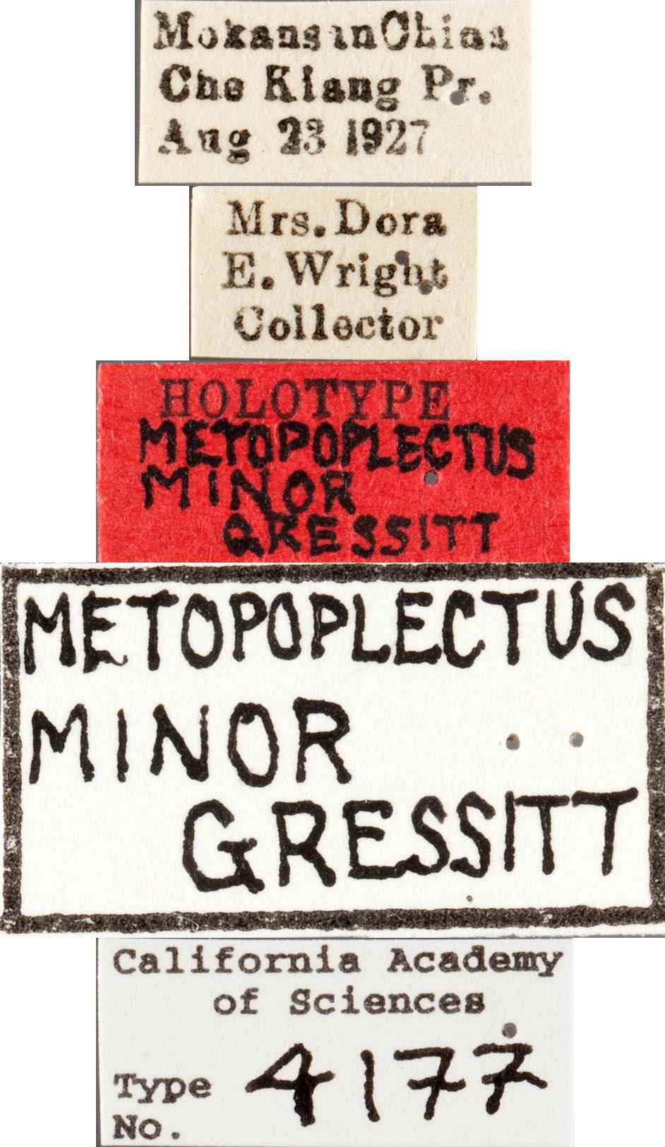Metopoplectus minor image