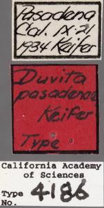 Image of Duvita pasadenae