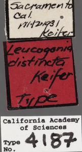Image of Leucogonia distincta