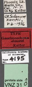 Image of Gnorimoschema elmorei