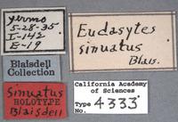Image of Eudasytes sinuatus