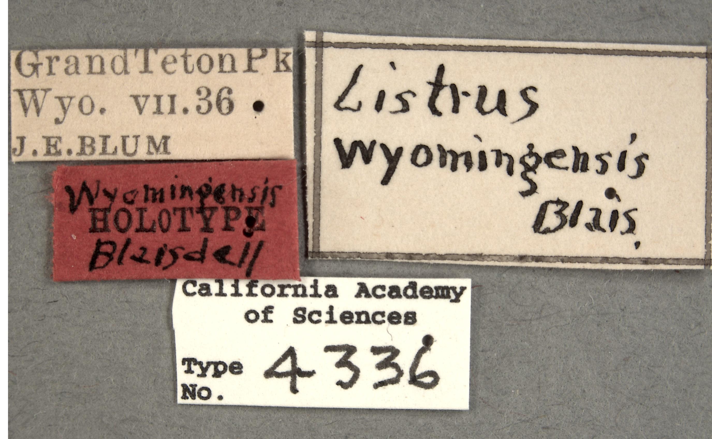 Listrus wyominensis image