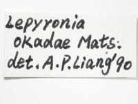Lepyronia angulata image