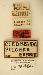 Cleomenida pulchella image