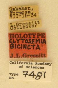Clytosemia bicincta image
