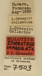 Exocentrus immaculatus image