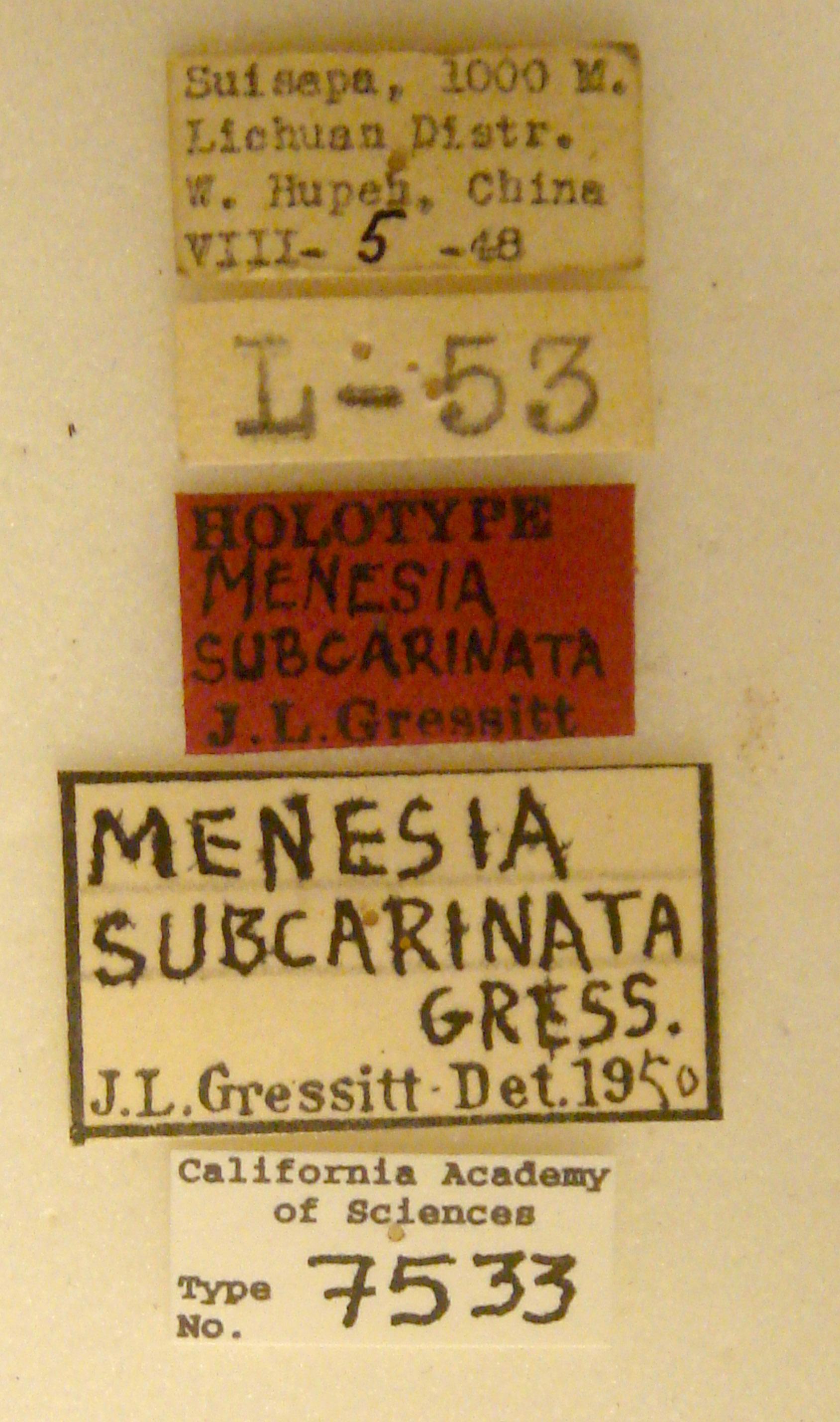 Menesia subcarinata image