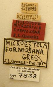 Image of Microestola formosana