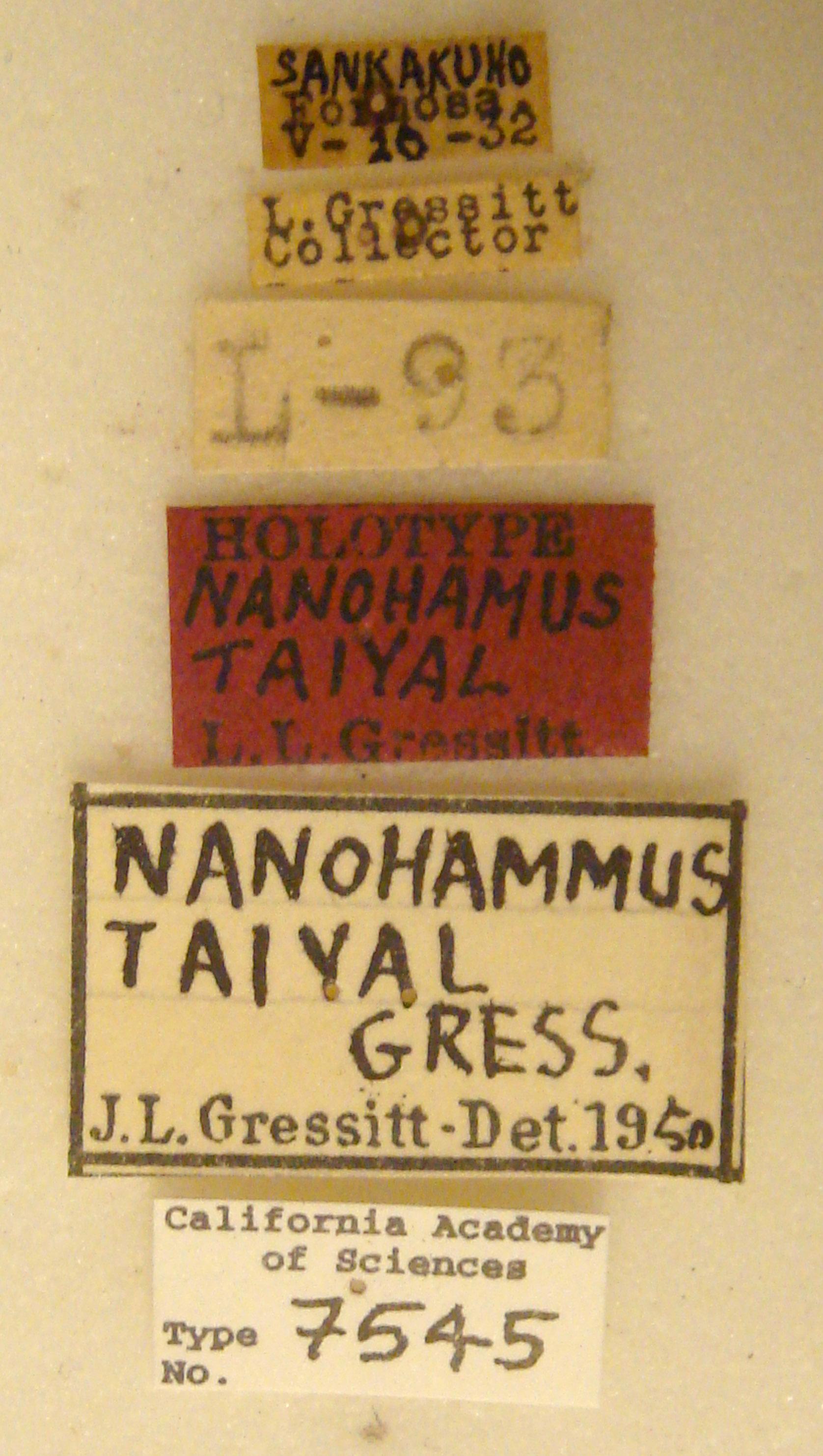 Nanohammus image
