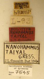 Nanohammus taiyal image