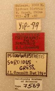 Pseudanaesthetis sordidus image