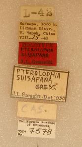 Pterolophia suisapana image
