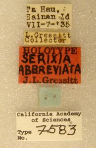 Serixia abbreviata image