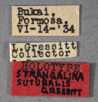 Image of Strangalina suturalis